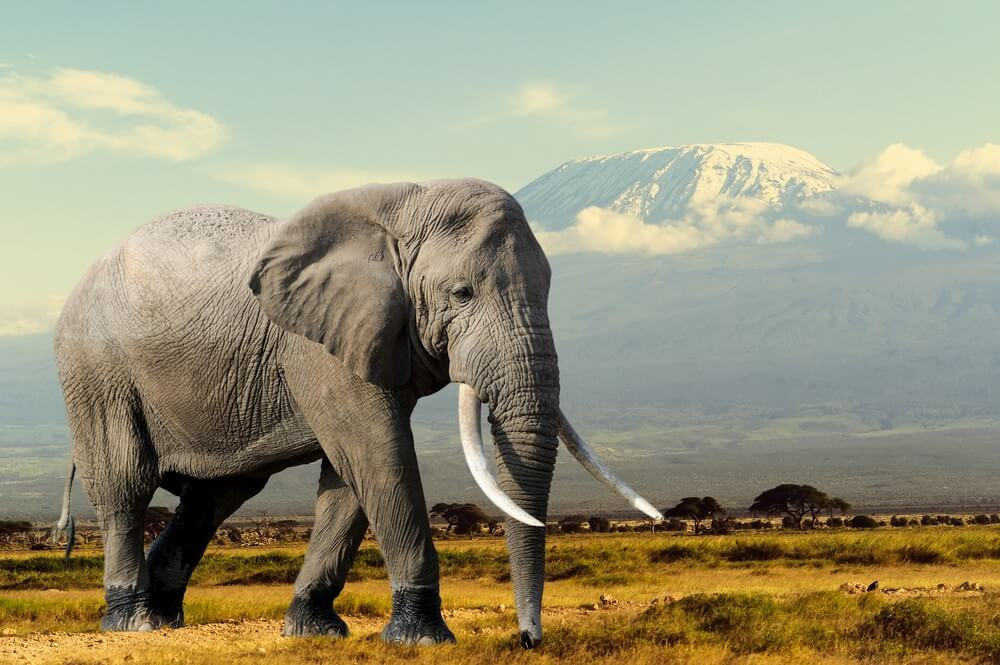 An elephant with mountains in the background