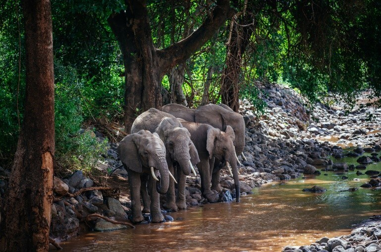 A group of elephants in forest
